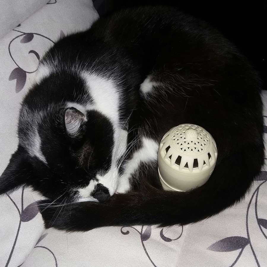 Katze-Tara-von-Daniela-Wallner_echobell_900x900