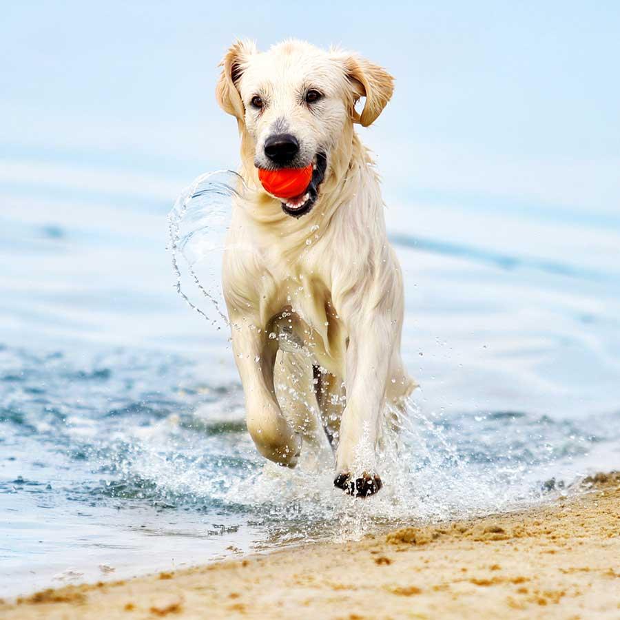echobell-hund-gesund